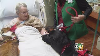 Therapy Dogs Make Surprise Visit At Hospital