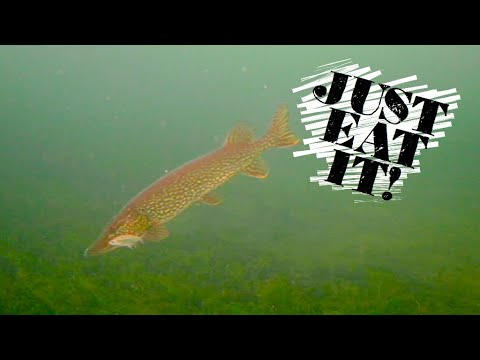 Ice Fishing With Underwater Camera + How To Record