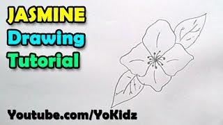 How to draw Jasmine Flower