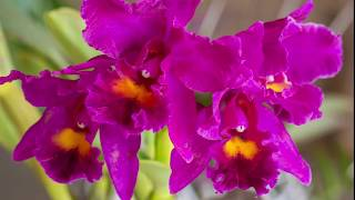 Maureen's Orchid and Garden Show