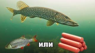 Рыбалка ШОК ЗРЕЛИЩНЫЕ АТАКИ ЩУКИ на СОСИСКУ и ЖИВЦА Реакция рыбы Подводная съёмка