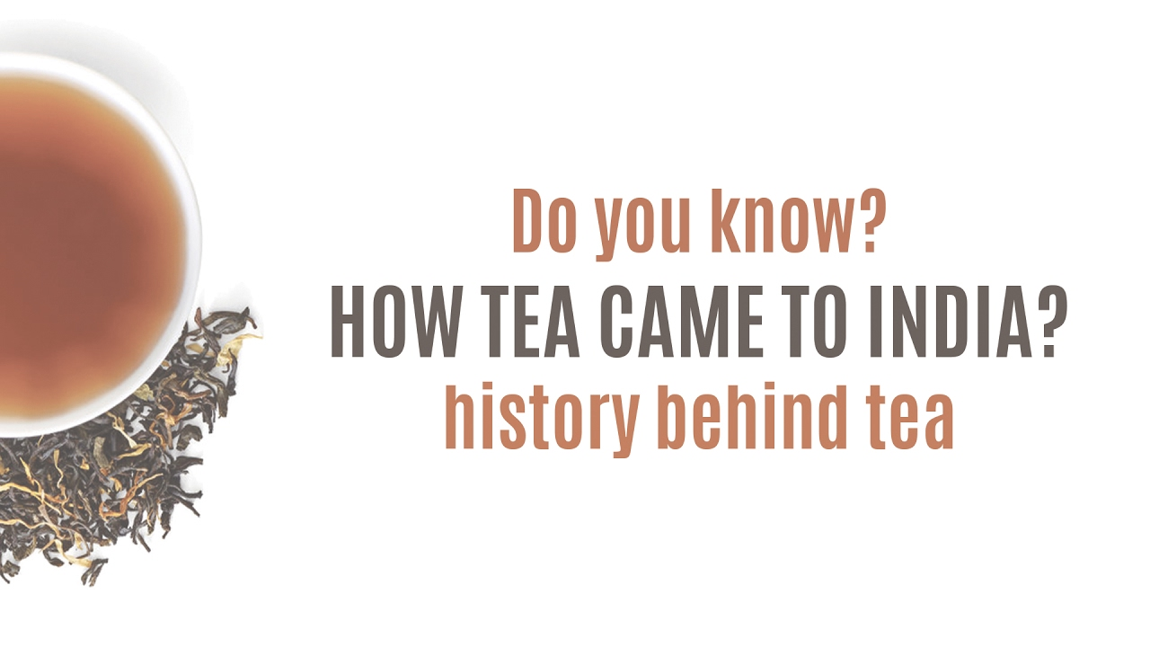 tea introduction