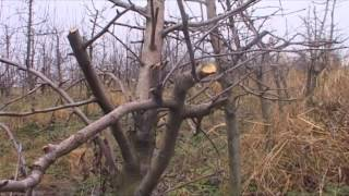 Repeat youtube video Orezivanje voća