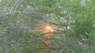 Powerline down with tree on fire