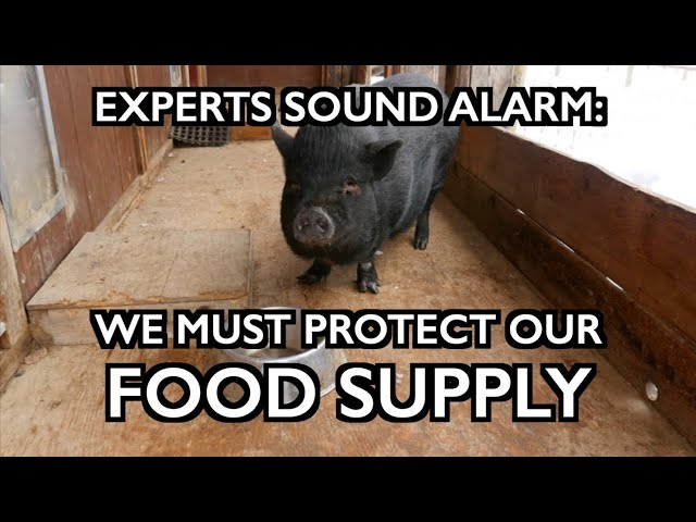Experts Sound Alarm: We Must Protect Our Food Supply