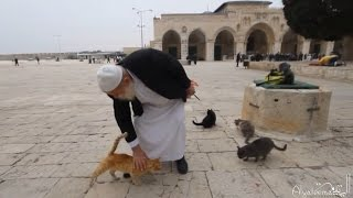 This man has been looking after the cats of Masjid Al Aqsa for 30 years.