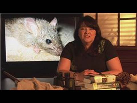 Mice & Rats : Where Do Rats Live?