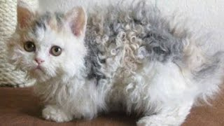 Cat's fur is curly like a poodle – then her owner looks closer and realizes the unthinkable