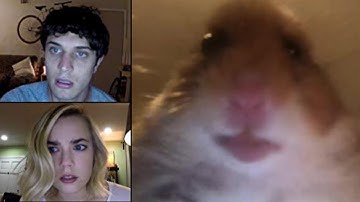 Unfriended: Hamster Webcam