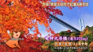 今回の「磯山さやかの旬刊!いばらき」では,磯山さやかさんが茨城の紅...