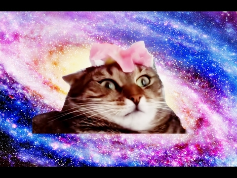Cat Can T Handle Flower Song