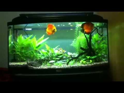 aquarium co2 planted tank 150 l youtube. Black Bedroom Furniture Sets. Home Design Ideas