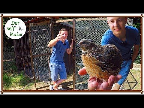 Hühnerstall/Wachtelstall selber bauen -Teil 1/3 die Voliere und Auslauf
