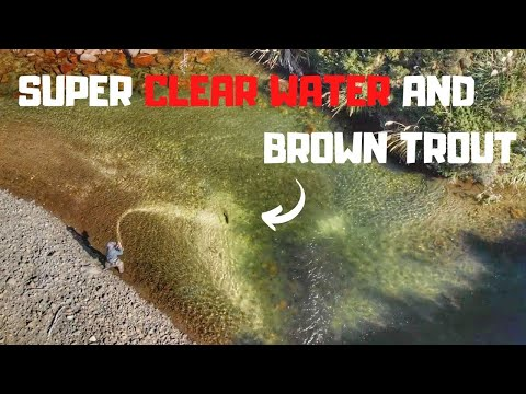 super-clear-water-and-brown-trout