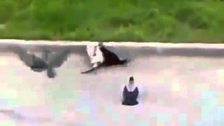 Прикольные кошки Храбрая кошка против трёх врагов  Забавно смотреть! !