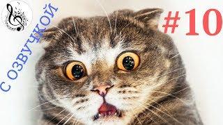 ПРИКОЛЫ С КОТАМИ СМЕШНЫЕ КОТЫ  ТОПовая ПОДБОРКА  #10