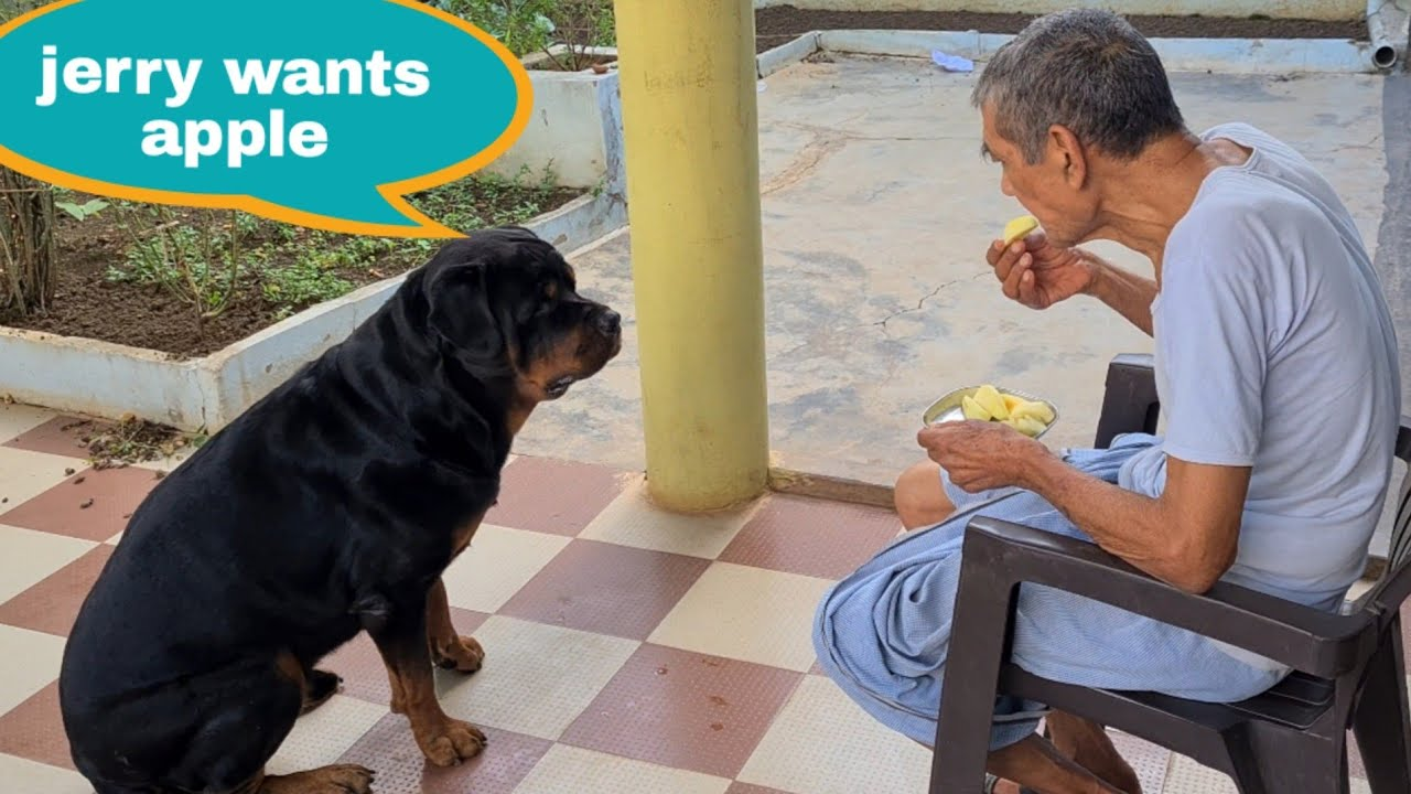 My grandfather can't eat without Jerry||funny dog video