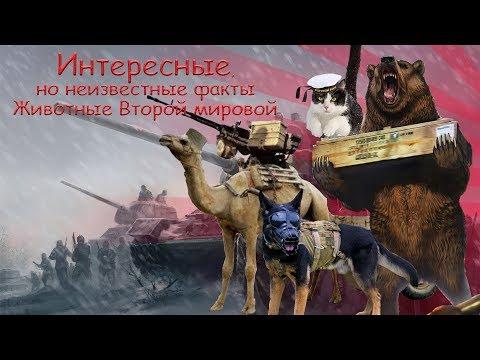 Боевые животные