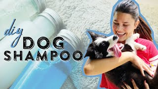 Cheap Homemade Dog Shampoo | Dog Care 101 | Southern Living From Home
