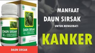 Jakarta, tvOnenews.com - ALAMI! Daun Sirsak Terbukti Hancurkan Berbagai Jenis Sel Kanker - Hidup Seh.