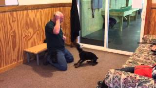 Beautiful Doberman Pup