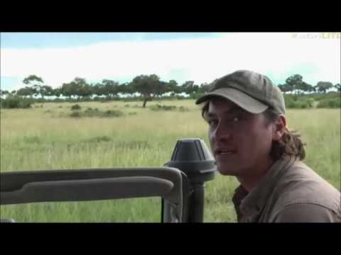 Safari Live : Brent and Eggsy Live in the Masai Mara this afternoon on drive May 06, 2017