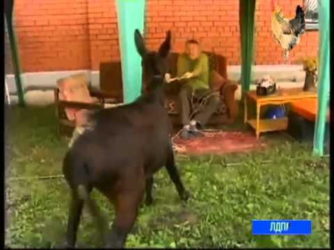 Зоофилия - смотреть порно с животными онлайн видео pjjabkbz