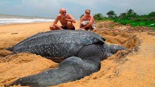 ТОП 10 САМЫЕ БОЛЬШИЕ ЖИВОТНЫЕ В МИРЕ / The Biggest Animals In The World