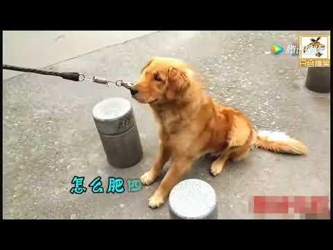 带狗狗去打针 当针头扎进去的那刹那 我快笑死了