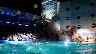 Дельфинарий НЕМО (Одесса) - Ночное шоу(http://chayka.od.ua/ Дельфинарий НЕМО (Одесса) - Ночное шоу., 2011-11-13T19:00:03.000Z)