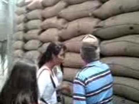 Grupo # 3  Exportación del Cacao