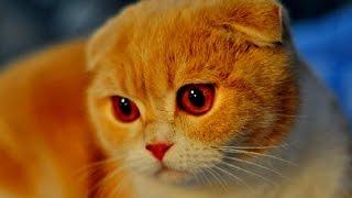 Выставка кошек-5