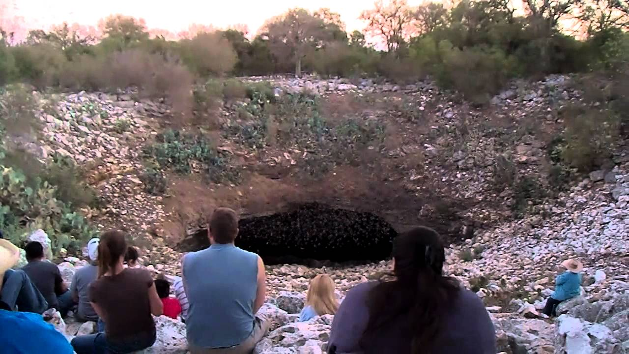 Bats At Bracken Cave Just North Of San Antonio Texas