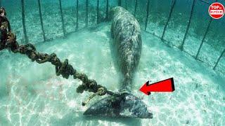 10 Thứ Bí Ẩn Và Đáng Sợ Được Con Người Tìm Thấy Dưới Đáy Đại Dương | Top 10 Huyền Bí