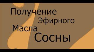 Получение эфирного масла сосны(, 2014-12-11T13:56:11.000Z)