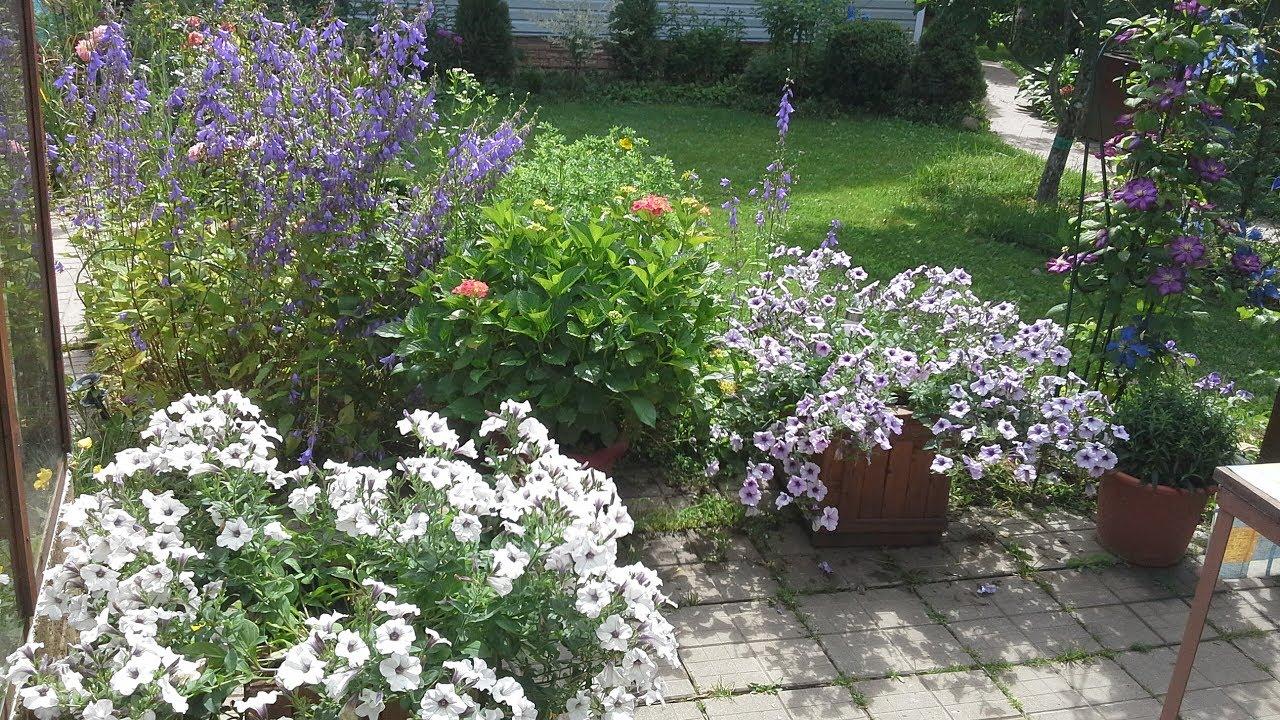 Как я сажаю петунии в горшки/небольшие секретики зарываю)сколько растений на горшок и какая почва