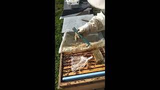 Arılara şurup şerbet ve kek verme sıkıştırma arıcılık bahar kontrolü apicultura beekeepin 03 02 19