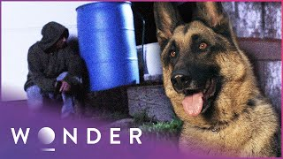 Police Dog Saves Owner From Armed Criminal | Pet Heroes S1 EP9 | Wonder
