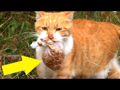 Diese Katze akzeptiert Nahrung nur aus dem Plastikbeutel – Du wirst niemals glauben warum!