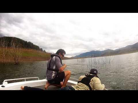 murray cod 114 blowering dam