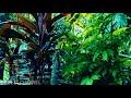 Relaksasi Suara Rintik Hujan Di Iringi Suara Jangkrik  Mp3 - Mp4 Download