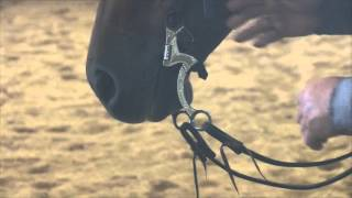 Bits & Bridle Basics with Mike Davis