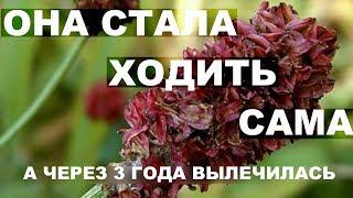 Рак матки Это растение излечит рак Живой пример