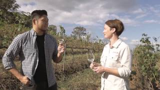 Exploring The Hunter With Billy Law: Semillon And Goats Cheese