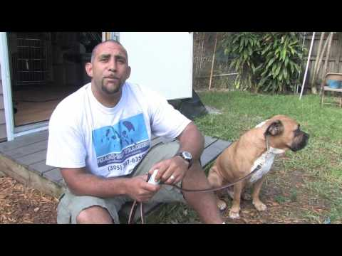Dog Training Canine Health What Medicines Are Safe To Give Pet