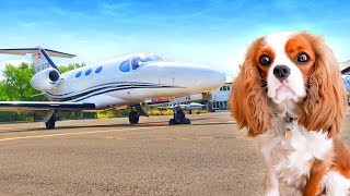 We FLEW our dog on a PRIVATE JET! ✈️