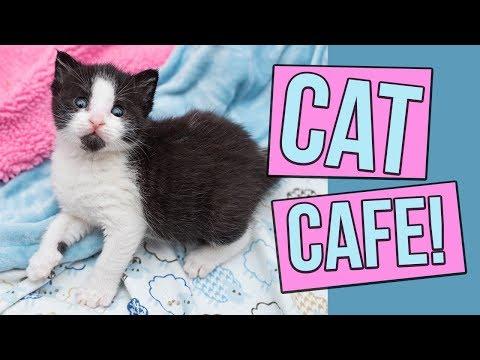 A Peek Inside Kawaii Kitty Cafe in Philadelphia