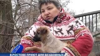 В Ростове закроют приют для бездомных животных
