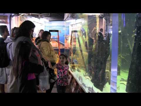 Santa Monica Pier Aquarium opens Dorothy Green Room