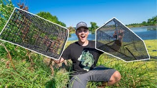 Using FISH TRAPS to STOCK My Pond!!!